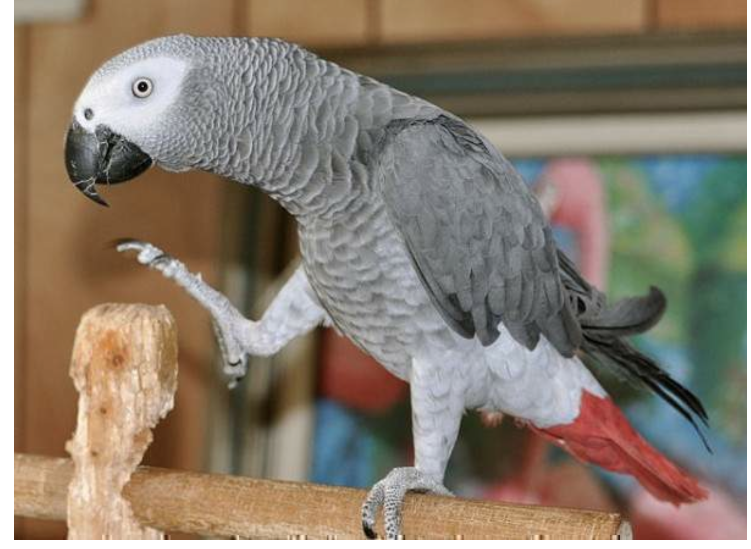 Congo african grey pictures Black Beauty & Hair Magazine